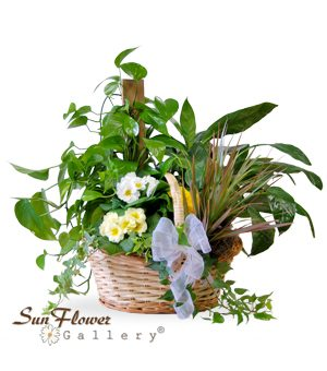 Plants & Gift Baskets