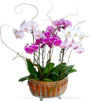 Orchids & Tropical Plants
